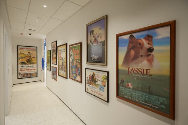 The Museum of the Dog, New York City. Courtesy American Kennel Club, photo by David Woo.