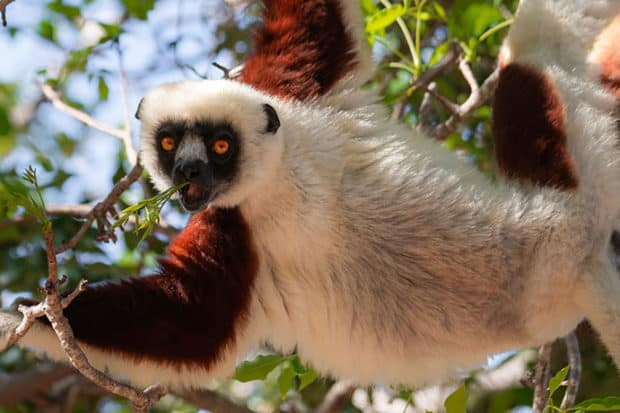 Travel to Madagascar: 6 to Know