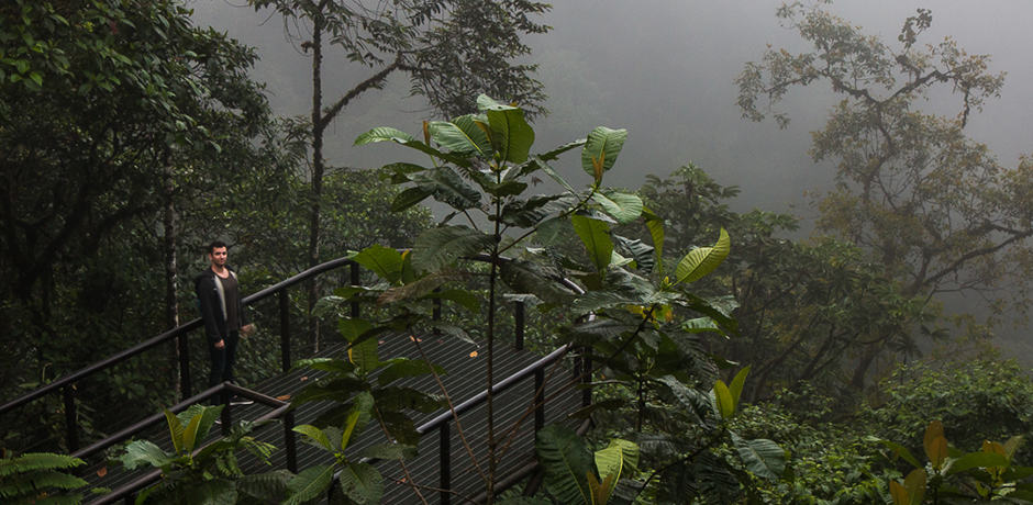 Looking out on the cloud forest