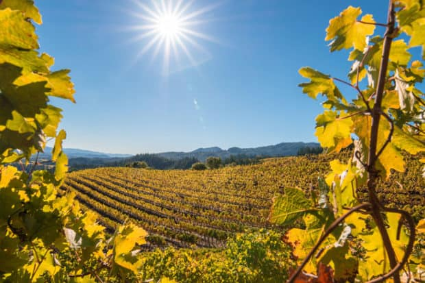 Why Go Now: Napa Valley