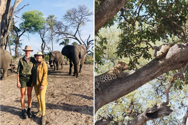 Indagare's Elise Bronzo with her mother while scouting in Botswana; right: leopards lounging in a tree.