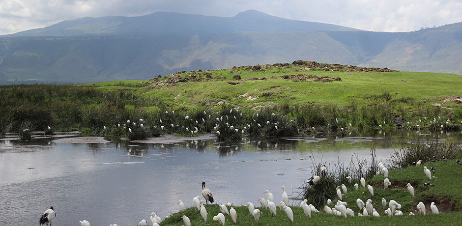 A lake with ibises at the Ngorongoro Crater