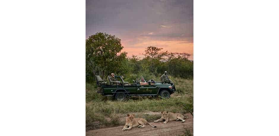 Lions on a game drive at The Farmstead at Royal Malewane, South Africa. Courtesy the Royal Portfolio.
