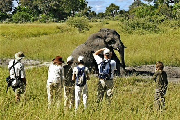 Safari group viewing elephant at Chief's Camp, Botswana