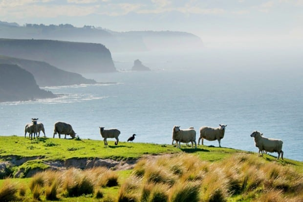 New Zealand's Annandale