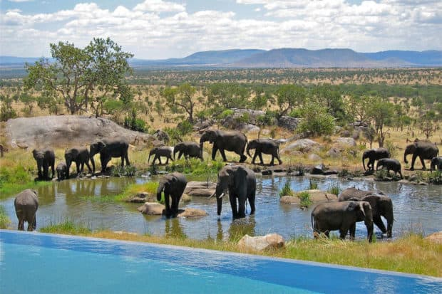 The resort pool overlooks an elephant watering hole. Courtesy Four Seasons Serengeti