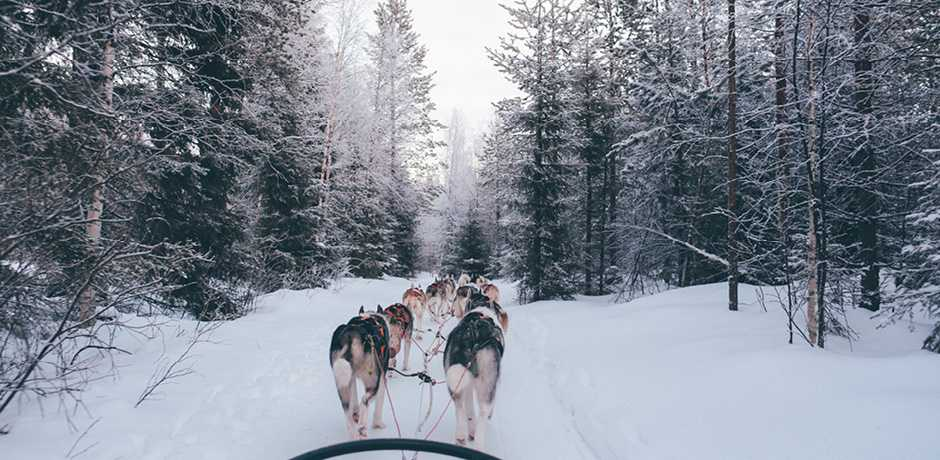 Dog sledding is one of the many adventure activities ideal for families in Swedish Lapland.