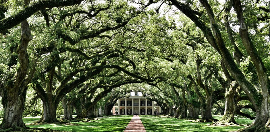 New Orleans and its surroundings are filled with many stunning private mansions and townhouses, which we will explore on our December Insider Journey through city visits and trips to the River Road homes outside of central NOLA.