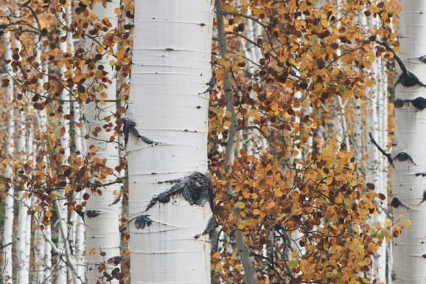 LP-Aspen-Courtesy-john-price-5257