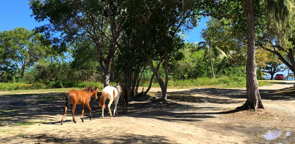 A Quick Getaway to Vieques