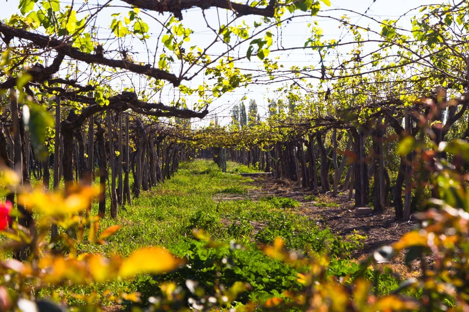 Indagare Tours: Best of the Wineries