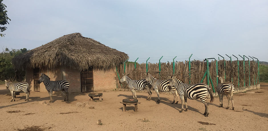 Originally a private home for billionaire Sir James Goldsmith, Cuixmala has a population of zebra. Goldsmith imported two from Africa decades ago, and they've since grown in number.