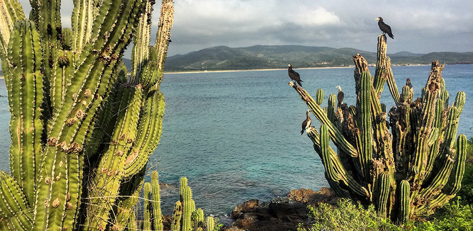 From Cuixmala's private beach, guests can opt to go on boat rides to islands like this one, which has giant cacti.