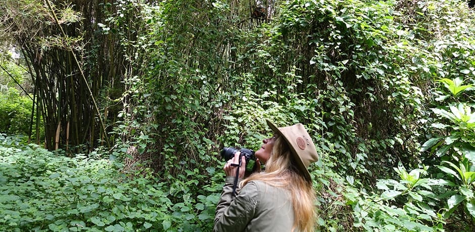 Trekking to see the gorillas, golden monkeys or chimps in Virunga National Park, which falls in Rwanda, Uganda and Congo, can be a one-hour easy walk, a six-hour hike up hill in dense forest or anything in between.
