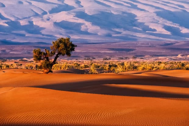 The Sahara desert in Morocco. Photo by Sergey Pesterev