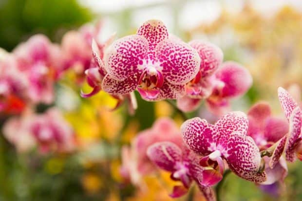Orchids at the New York Botanical Garden.