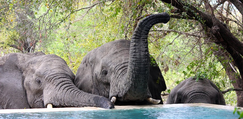 Elephants taking a drink in South Africa, photographed by Destinations Editor Emma Pierce.