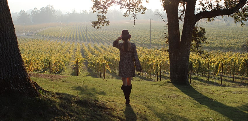 Vineyard touring is one of the highlights of long weekend getaways to Sonoma and Napa. Valley, courtesy Sonoma Valley Visitors Bureau