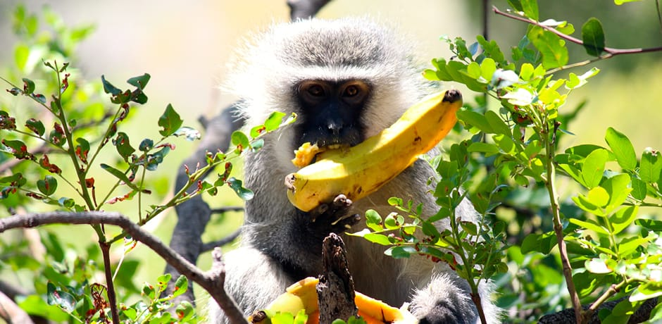 A monkey in South Africa, photographed by Destinations Editor Emma Pierce.