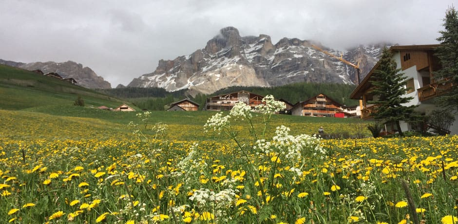 A field of wildflowers in the Dolomite Mountains.