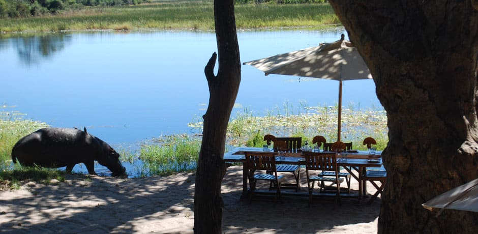 An unexpected lunch visitor in Botswana.