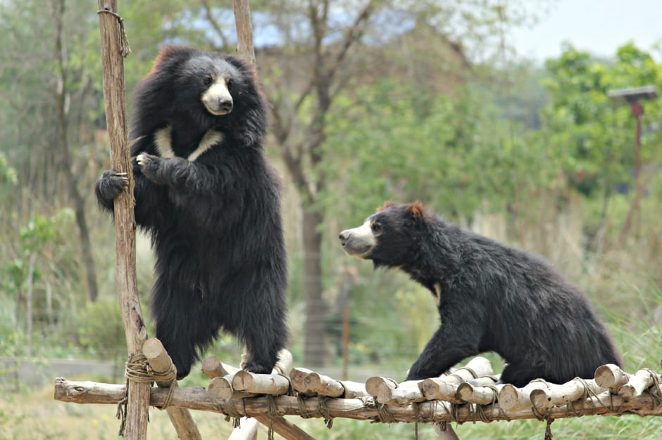 Agra Bear Rescue Facility