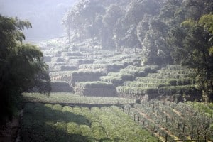 Indagare Tour: Tea Fields and Villages