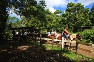 Indagare Tour: Horseback Riding in the Foothills of Carabali Rainforest