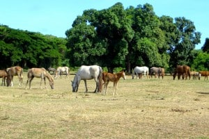 Indagare Tours: Horseback Riding