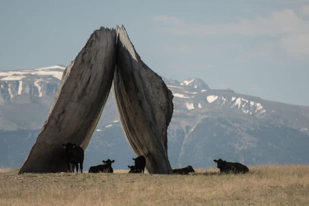 Ensamble Studio (Antón García-Abril and Débora Mesa), the Inverted Portal, 2016. Courtesy Tippet Rise Art Center. Photo by Erik Petersen.