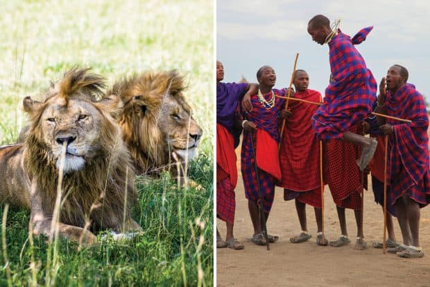 Lions and local people celebrating in Tanzania