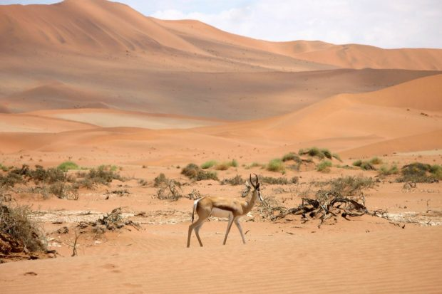 The desert of Namibia. Courtesy Gregory Brown