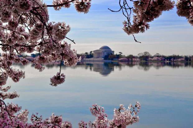 The Tidal Basin during